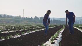 Due agronomi che camminano in un campo di mattina che ispeziona le plantule video d archivio