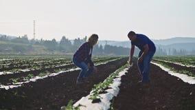 Due agronomi che camminano in un campo di mattina che ispeziona le plantule archivi video