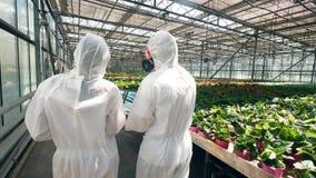 Due agronomi stanno camminando lungo la pianta in una vista della parte video d archivio