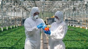 Due agronomi stanno riempiendo il pepe di prodotti chimici stock footage