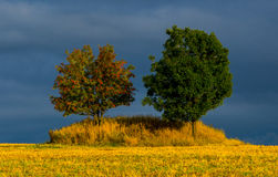 Due alberi Immagine Stock