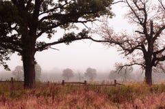 Due alberi Fotografie Stock Libere da Diritti
