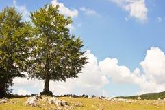 Due alberi contro il cielo nuvoloso blu Fotografia Stock Libera da Diritti
