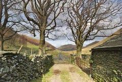 Due alberi e un cancello dell'azienda agricola Fotografia Stock Libera da Diritti