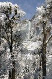 Due alberi e Yosemite Falls Immagini Stock