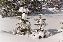 Due alberi in inverno fotografia stock