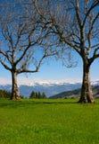 Due alberi in montagne Immagini Stock