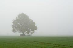 Due alberi nel campo nebbioso Fotografia Stock Libera da Diritti