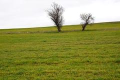 Due alberi nel campo verde Immagine Stock Libera da Diritti