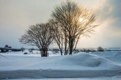 Due alberi nella scena della neve immagini stock libere da diritti