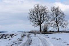 Due alberi nudi che crescono nella curvatura di un percorso di inverno in un paesaggio nevoso negli altopiani Fotografie Stock Libere da Diritti