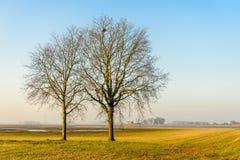 Due alberi nudi nella priorità alta di un paesaggio paludoso piano Immagini Stock Libere da Diritti