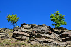 Due alberi si sviluppano su una roccia Fotografia Stock Libera da Diritti