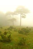 Due alberi sotto nebbia Fotografia Stock