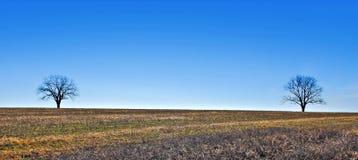 Due alberi sotto un cielo blu Fotografia Stock