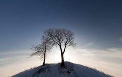 Due alberi sulla collina Immagini Stock Libere da Diritti