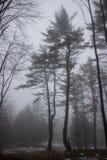 Due alberi in un campo nebbioso Immagini Stock Libere da Diritti