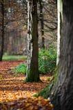 Due alberi in un parco Fotografie Stock Libere da Diritti
