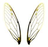 Due ali della cicala Fotografie Stock Libere da Diritti