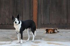Due amici Fotografie Stock