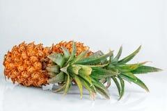 Due ananas freschi Fotografie Stock