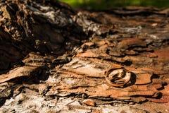 Due anelli di cerimonia nuziale dell'oro Fotografie Stock Libere da Diritti