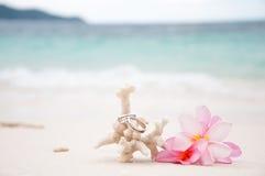 Due anelli di cerimonia nuziale su corallo davanti alla spiaggia Fotografie Stock