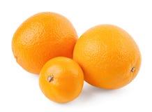 Due aranci e mandarini Immagini Stock Libere da Diritti