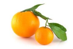 Due aranci perfettamente freschi Immagini Stock Libere da Diritti