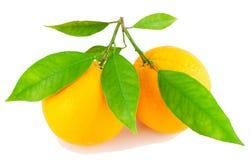 Due aranci su una filiale con i fogli Fotografie Stock Libere da Diritti