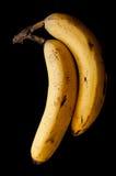 Due banane mature Fotografia Stock