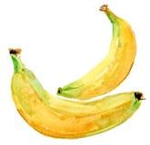Banane illustrazione vettoriale