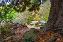 Due banchi in un parco sulla stagione di autunno immagini stock