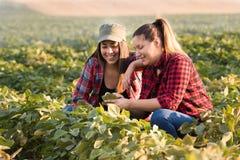 Due bei e giovani ragazze dell'agricoltore che esaminano il raccolto del fagiolo della soia Fotografia Stock Libera da Diritti