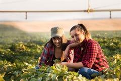 Due bei e giovani ragazze dell'agricoltore che esaminano il raccolto del fagiolo della soia Fotografia Stock