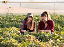 Due bei e giovani ragazze dell'agricoltore che esaminano il raccolto del fagiolo della soia Fotografie Stock Libere da Diritti