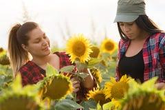Due bei e giovani ragazze dell'agricoltore che esaminano il raccolto del girasole Immagine Stock Libera da Diritti