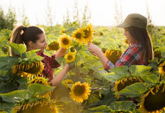 Due bei e giovani ragazze dell'agricoltore che esaminano il raccolto del girasole Immagini Stock Libere da Diritti