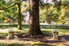 Due bences di bambù in autunno parcheggiano un giorno soleggiato immagini stock