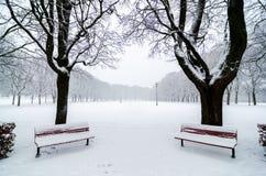 Due benchs in parco durante precipitazioni nevose Innevato Allineamento dell'albero Fotografia Stock