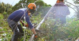 Due boscaioli con il tronco di albero di taglio della motosega 4k archivi video