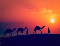 Due cameleers con i cammelli in dune del deser di Thar immagini stock libere da diritti