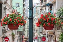 Due canestri dei fiori rosa-chiaro dell'ipomoea Fotografia Stock Libera da Diritti
