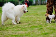 Due cani Immagini Stock Libere da Diritti