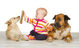 Due cani che fiancheggiano un bambino sveglio Fotografie Stock