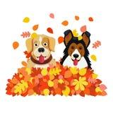 Due cani che giocano in autunno caduto copre di foglie mucchio Fotografia Stock