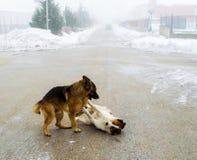 Due cani che giocano nella via fotografia stock