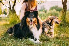 Due cani che si siedono accanto alla donna in erba Uno dei cani - le collie fotografia stock