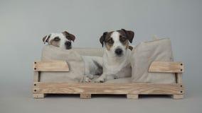 Due cani che si siedono a casa video d archivio