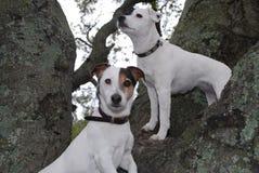 Due cani che si siedono su un albero Fotografia Stock